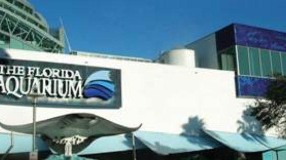Metal scales aquarium